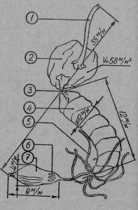 Пищеварительный аппарат рабочей пчелы: 1 - глотка, 2 - медовый зобик, 3 - промежуточная кишка, 4 - желудок, 5 - Маль-пигиевы органы, 6 - ректальные железы; 7 - мешочек с экскрементами.
