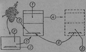 Пчелиная семья (1) после отпускания роя должна быть перемещена в направлении, указанном стрелкой (4), на место (8). изображенное пунктиром. Новый улей (7)                        перемещается на место                       улья строившейся семьи   (5). Рой (3) нужно вы-  сыпать в новый улей (2). Летных пчел из исходной семьи (6) возвращают на старое место, но в новый улей. Исходная семья после утраты летных пчел снова не роится.